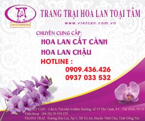 Hoa Lan Toại Tâm - Việt Can